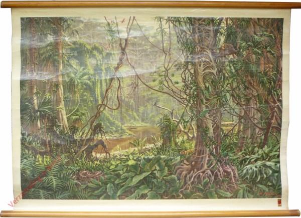 5 - Südamerikanischer Urwald Tropischer Regenwald